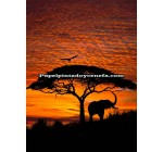 Mural Scenics Edition 1 Ref. M-4-501_AFRICAN_SUNSET